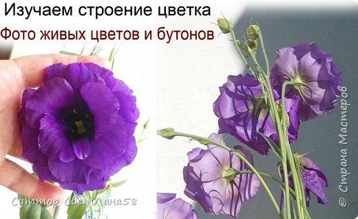Цветок эустомы из холодного фарфора без молда и каттеров фото 2