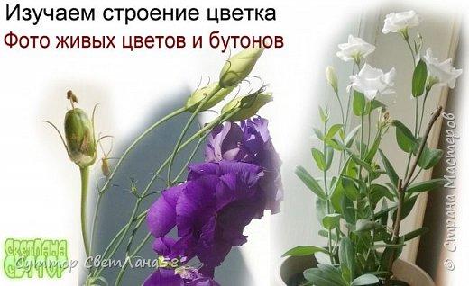 Цветок эустомы из холодного фарфора без молда и каттеров фото 3