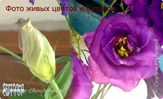 Цветок эустомы из холодного фарфора без молда и каттеров фото 4