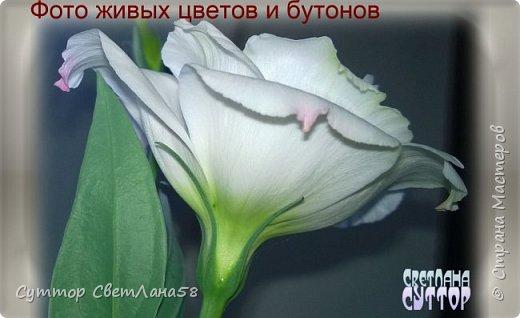 Цветок эустомы из холодного фарфора без молда и каттеров фото 5