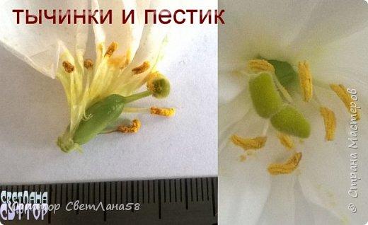 Цветок эустомы из холодного фарфора без молда и каттеров фото 7