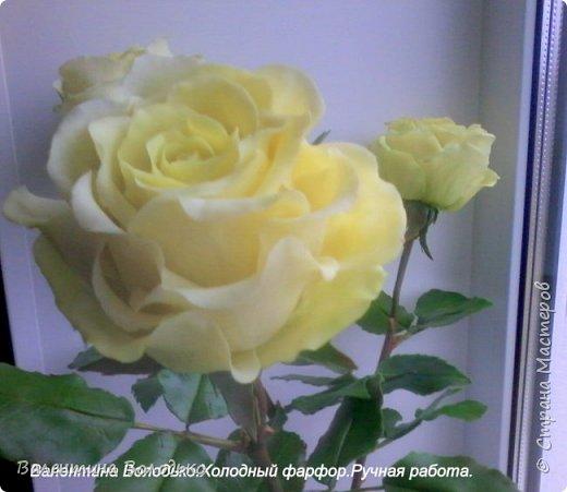 Добрый день мастера и мастерицы.У меня новые розы.Нежно лимонные.Фото не передают нежность оттенка,нету солнышка. фото 2