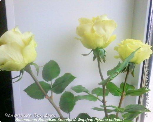 Добрый день мастера и мастерицы.У меня новые розы.Нежно лимонные.Фото не передают нежность оттенка,нету солнышка. фото 3
