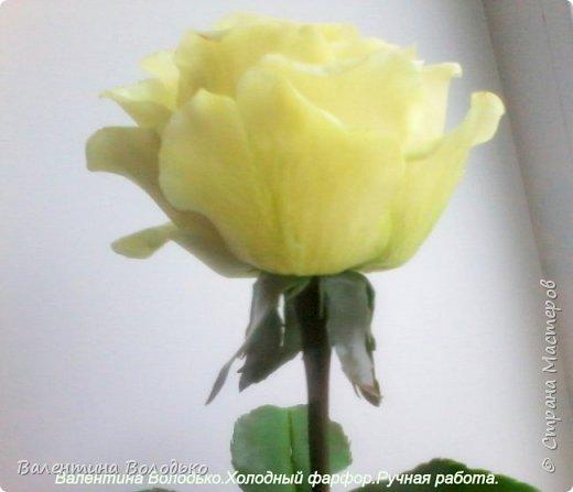 Добрый день мастера и мастерицы.У меня новые розы.Нежно лимонные.Фото не передают нежность оттенка,нету солнышка. фото 4