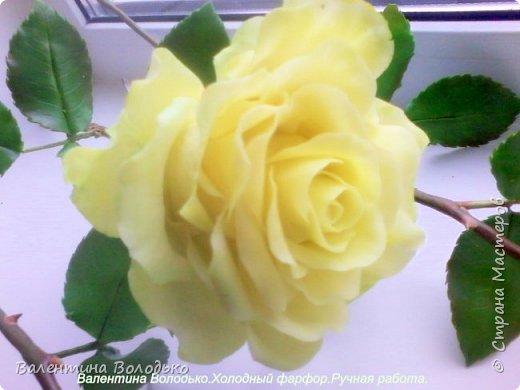 Добрый день мастера и мастерицы.У меня новые розы.Нежно лимонные.Фото не передают нежность оттенка,нету солнышка. фото 5