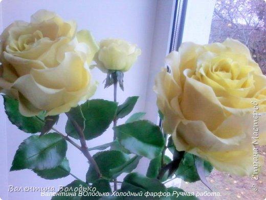 Добрый день мастера и мастерицы.У меня новые розы.Нежно лимонные.Фото не передают нежность оттенка,нету солнышка. фото 1