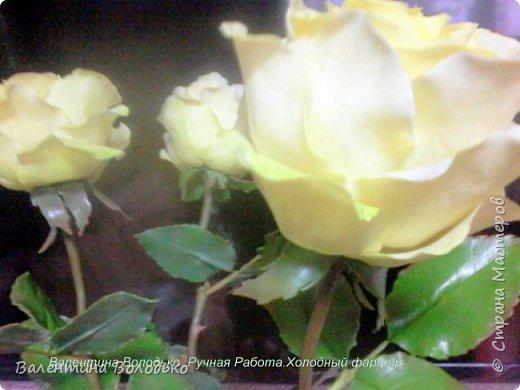 Добрый день мастера и мастерицы.У меня новые розы.Нежно лимонные.Фото не передают нежность оттенка,нету солнышка. фото 6