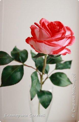 роза в смешанной технике из шелкового фоамирана и полимерной глины фото 3