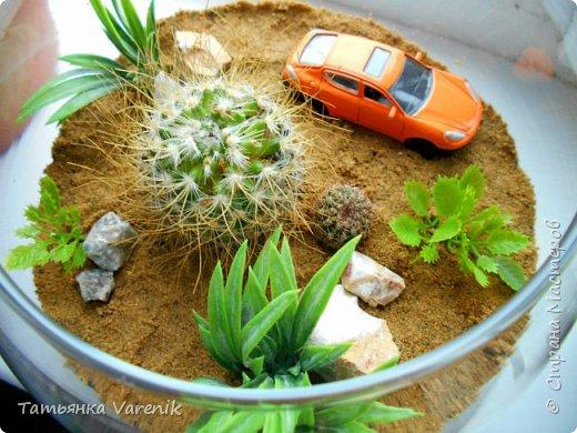 Теперь у нас дома есть вот такой миниатюрный оазис живой природы=) фото 2