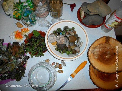 Мини-сад за стеклом или флорариум своими руками фото 12