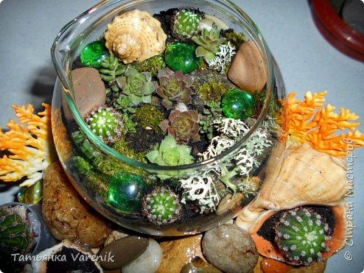 Мини-сад за стеклом или флорариум своими руками фото 5