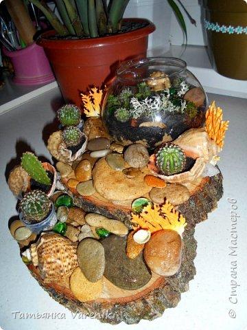 Мини-сад за стеклом или флорариум своими руками фото 7