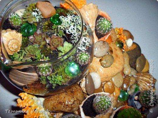 Мини-сад за стеклом или флорариум своими руками фото 8