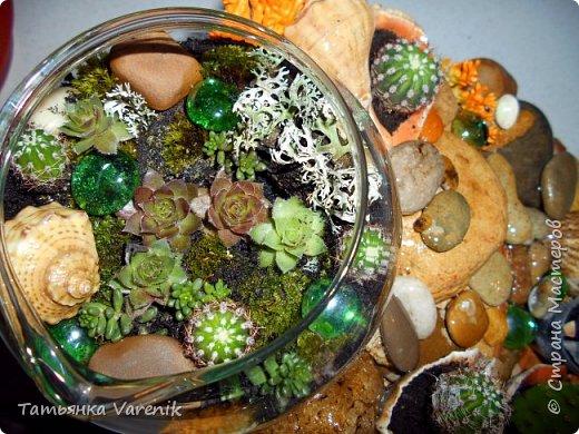 Мини-сад за стеклом или флорариум своими руками фото 9