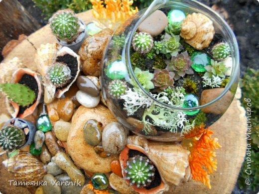 Мини-сад за стеклом или флорариум своими руками фото 4