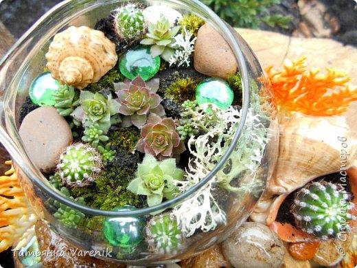 Мини-сад за стеклом или флорариум своими руками фото 2