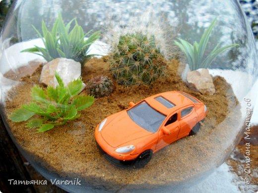 Теперь у нас дома есть вот такой миниатюрный оазис живой природы=) фото 4
