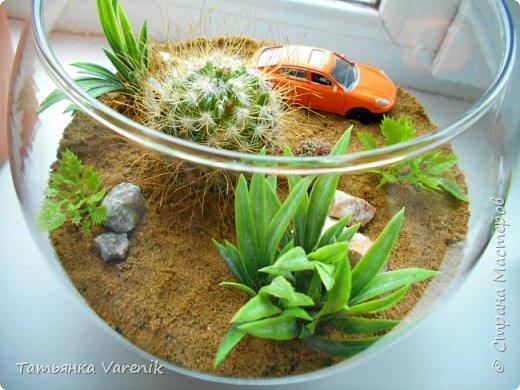 Теперь у нас дома есть вот такой миниатюрный оазис живой природы=) фото 5