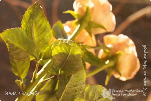 Дорогие мои,я сегодня к вам с теплыми,уютными розами!!! А ведь именно этого так хочется,когда за окном ветер и морозно) фото 6