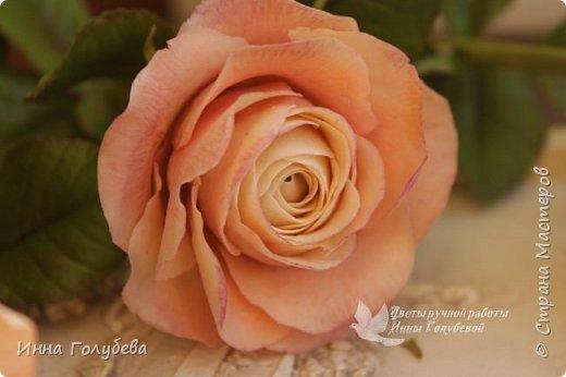 Дорогие мои,я сегодня к вам с теплыми,уютными розами!!! А ведь именно этого так хочется,когда за окном ветер и морозно) фото 8
