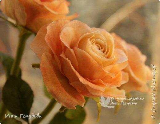 Дорогие мои,я сегодня к вам с теплыми,уютными розами!!! А ведь именно этого так хочется,когда за окном ветер и морозно) фото 1