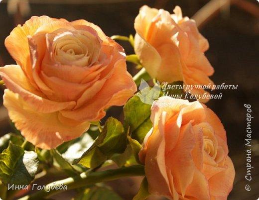 Дорогие мои,я сегодня к вам с теплыми,уютными розами!!! А ведь именно этого так хочется,когда за окном ветер и морозно) фото 2