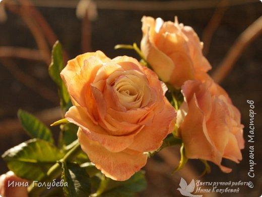 Дорогие мои,я сегодня к вам с теплыми,уютными розами!!! А ведь именно этого так хочется,когда за окном ветер и морозно) фото 9