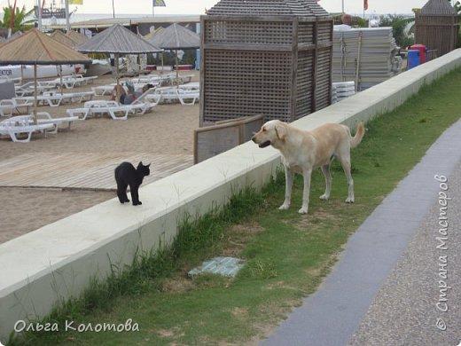 Турция, Сиде. Во время прогулок можно встретить много интересного. В том числе и кошек. Как же турецких кошек не сфотографировать! Рыжий котик в античном Сиде. фото 6