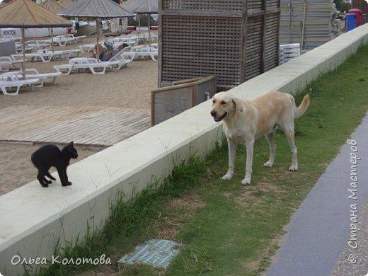 Турция, Сиде. Во время прогулок можно встретить много интересного. В том числе и кошек. Как же турецких кошек не сфотографировать! Рыжий котик в античном Сиде. фото 7