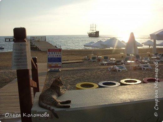 Турция, Сиде. Во время прогулок можно встретить много интересного. В том числе и кошек. Как же турецких кошек не сфотографировать! Рыжий котик в античном Сиде. фото 2