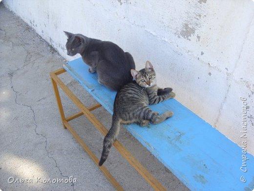 Турция, Сиде. Во время прогулок можно встретить много интересного. В том числе и кошек. Как же турецких кошек не сфотографировать! Рыжий котик в античном Сиде. фото 10
