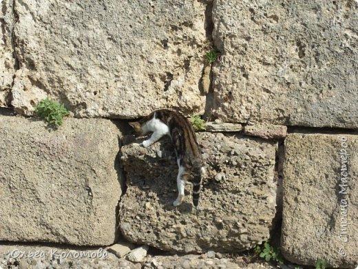 Турция, Сиде. Во время прогулок можно встретить много интересного. В том числе и кошек. Как же турецких кошек не сфотографировать! Рыжий котик в античном Сиде. фото 9