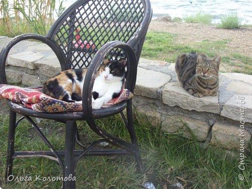 Турция, Сиде. Во время прогулок можно встретить много интересного. В том числе и кошек. Как же турецких кошек не сфотографировать! Рыжий котик в античном Сиде. фото 3