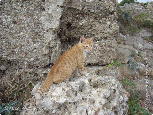 Турция, Сиде. Во время прогулок можно встретить много интересного. В том числе и кошек. Как же турецких кошек не сфотографировать! Рыжий котик в античном Сиде. фото 1