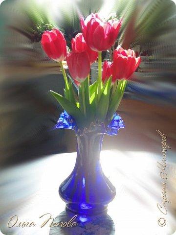 Нравятся мне эти цветочки, а нарисовать, всё не соберусь, вот и решила сфотографировать. фото 9