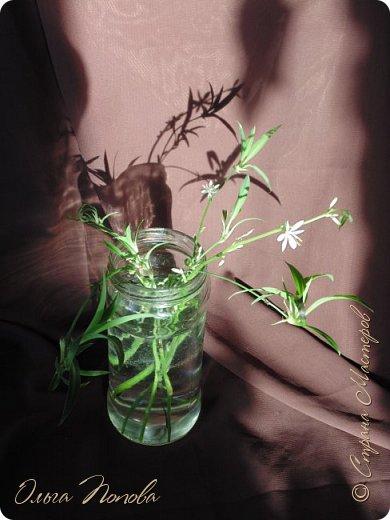 Нравятся мне эти цветочки, а нарисовать, всё не соберусь, вот и решила сфотографировать. фото 1