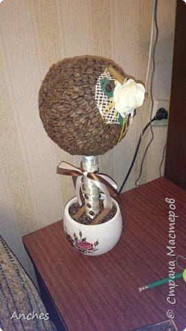 Кофейное дерево на день рождение Мамы
