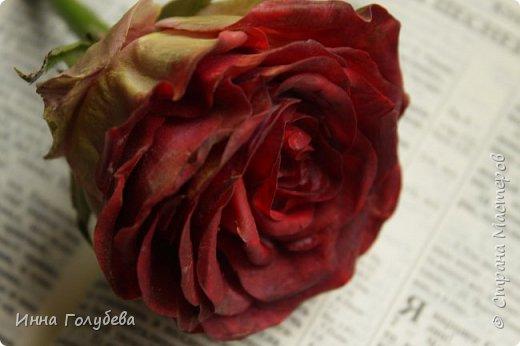 """""""Нас розы нежный аромат Манит в мечтательные дали, Она огонь, она и хлад, Созвездье радости-печали!!"""" ( Дмитрий Румата)  Не оставляю попыток слепить реалистичную увядающую розу) Вот и сейчас леплю букеты свежих,а тут нагрянуло вдохновение на такую))) Ну немного еще помучаю вас такой,а потом только свежие,обещаю) Все таки и в увядающих розах есть свое очарование и шарм,мне так кажется) фото 7"""