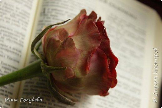 """""""Нас розы нежный аромат Манит в мечтательные дали, Она огонь, она и хлад, Созвездье радости-печали!!"""" ( Дмитрий Румата)  Не оставляю попыток слепить реалистичную увядающую розу) Вот и сейчас леплю букеты свежих,а тут нагрянуло вдохновение на такую))) Ну немного еще помучаю вас такой,а потом только свежие,обещаю) Все таки и в увядающих розах есть свое очарование и шарм,мне так кажется) фото 5"""