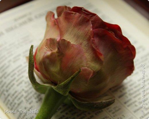 """""""Нас розы нежный аромат Манит в мечтательные дали, Она огонь, она и хлад, Созвездье радости-печали!!"""" ( Дмитрий Румата)  Не оставляю попыток слепить реалистичную увядающую розу) Вот и сейчас леплю букеты свежих,а тут нагрянуло вдохновение на такую))) Ну немного еще помучаю вас такой,а потом только свежие,обещаю) Все таки и в увядающих розах есть свое очарование и шарм,мне так кажется) фото 9"""