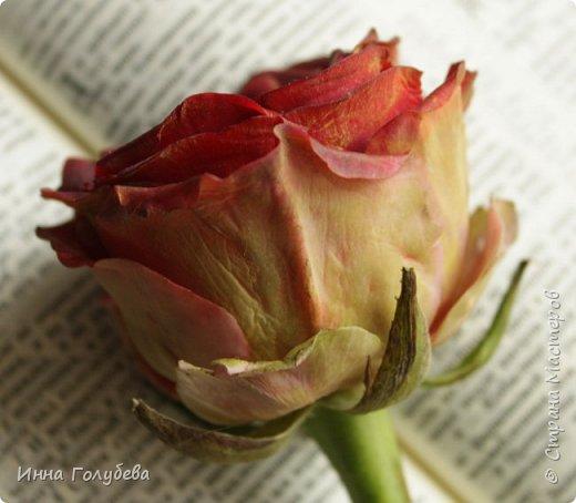 """""""Нас розы нежный аромат Манит в мечтательные дали, Она огонь, она и хлад, Созвездье радости-печали!!"""" ( Дмитрий Румата)  Не оставляю попыток слепить реалистичную увядающую розу) Вот и сейчас леплю букеты свежих,а тут нагрянуло вдохновение на такую))) Ну немного еще помучаю вас такой,а потом только свежие,обещаю) Все таки и в увядающих розах есть свое очарование и шарм,мне так кажется) фото 6"""