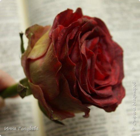 """""""Нас розы нежный аромат Манит в мечтательные дали, Она огонь, она и хлад, Созвездье радости-печали!!"""" ( Дмитрий Румата)  Не оставляю попыток слепить реалистичную увядающую розу) Вот и сейчас леплю букеты свежих,а тут нагрянуло вдохновение на такую))) Ну немного еще помучаю вас такой,а потом только свежие,обещаю) Все таки и в увядающих розах есть свое очарование и шарм,мне так кажется) фото 4"""