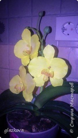 Моя первая орхидея. Подскажите как так,что бы проволоки не видно в лепестках было? фото 3