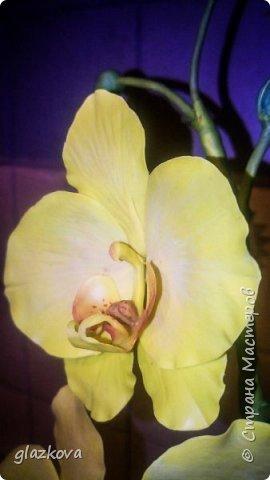 Моя первая орхидея. Подскажите как так,что бы проволоки не видно в лепестках было? фото 2