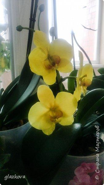 Моя первая орхидея. Подскажите как так,что бы проволоки не видно в лепестках было? фото 1