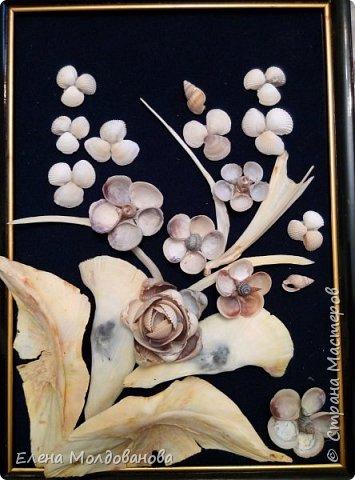 Картины из ракушек на пан бархоте фото 5