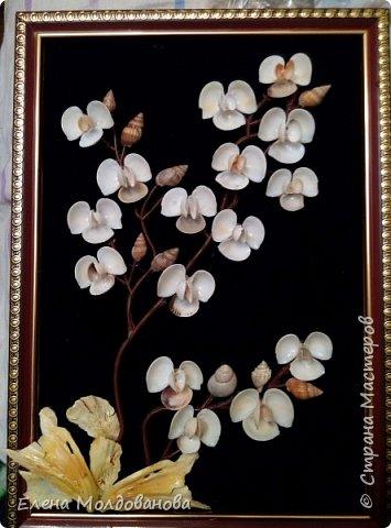 Картины из ракушек на пан бархоте фото 1