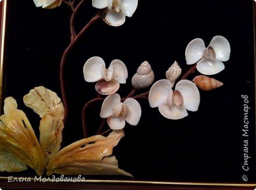 Картины из ракушек на пан бархоте фото 3
