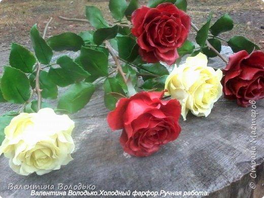 Добрый день мастера и мастерицы!!!!Слепила темно бордовые розы и с фотографировала с нежно лимонными,мне очень понравился контраст,нежность и страсть. фото 1