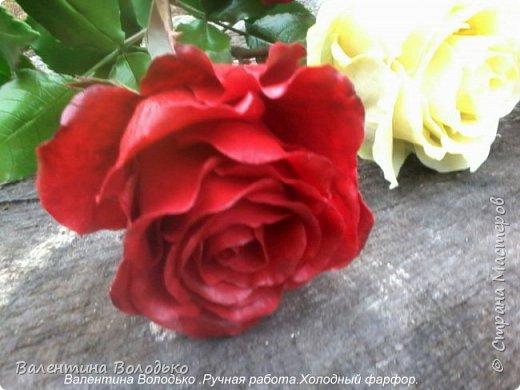 Добрый день мастера и мастерицы!!!!Слепила темно бордовые розы и с фотографировала с нежно лимонными,мне очень понравился контраст,нежность и страсть. фото 2